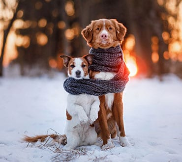 two-dogs-in-scarf